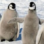 googleの検索エンジンがペンギンアップデート2.0(Penguin 2.0)に