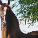 全て無料!!来年は馬年の年賀状デザイン・テンプレートを配布しているサイト