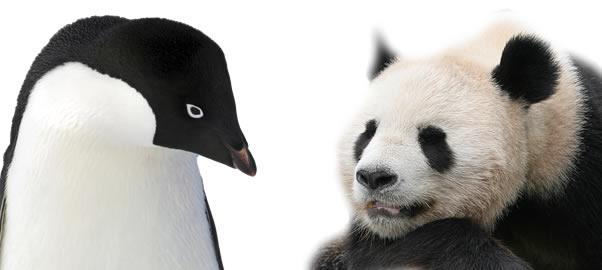 penguinpanda